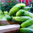 Fresh organic cucumbers — Stock Photo