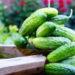 Fresh organic cucumbers - Stock Photo