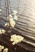 Suché rostliny u řeky — Stock fotografie