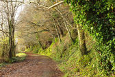 Pathway. Co.Cork, Ireland. Park road with trees. — Stock Photo