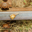 Snail on a railway rail - Stock Photo