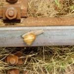 Snail on a railway rail — Stock Photo #24884705