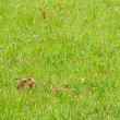 Hare in a meadow — Stockfoto