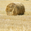 rolled straw after harvesting - wheat field — Stock Photo