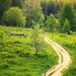Pathway in green forest Poland Bieszczady — Stock Photo