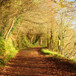 Autumn Pathway. Co.Cork, Ireland. — Stock Photo