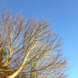 Stock Photo: Autumn. Branches of tree against the blue sky
