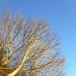 Autumn. Branches of tree against the blue sky — Stock Photo