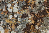 Background of stone rock with lichen and moss — Stock Photo
