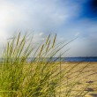 Stock Photo: Baltic segrassy sand dunes in foreground