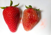 Healthy and rotten spoiled bad red strawberries — Stock Photo