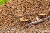 Fungo selvatico foresta sul terreno — Foto Stock