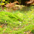 Stock Photo: Mossy undergrowth in autumn forest