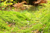 Mossy undergrowth in autumn forest — Stock Photo