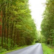 Landscape in Poland asphalt road in forest early autumn — Stock Photo