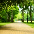 The stone path in the park. — Stock Photo #31982781