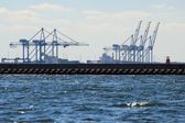 Large gantry cranes at the port of Gdansk, Poland. — Stock Photo
