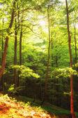 Beautiful green forest Poland Bieszczady — Stock Photo