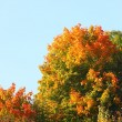 Beautiful autumn trees. Autumnal landscape. — Stock Photo