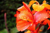 Orange flowers in the garden shined at sun — Stock Photo