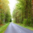 Landscape in Poland asphalt road in forest early autumn — Foto Stock