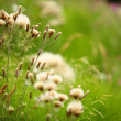 Meadow flowers on green blurred background — Stock Photo