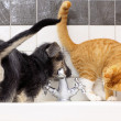 Animals at home dog and cat playing together in bathroom — Stock Photo