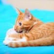 Animals at home - red cute little cat pet kitty on bed — Stock Photo #35155351