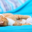 Animals at home - red cute little cat pet kitty on bed — Stock Photo #35222393