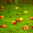 Stock Photo: Autumn background, red apples on ground in garden