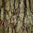 Old tree bark detail texture background — Foto Stock