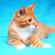 Animals at home - red cute little cat pet kitty on bed — Stock Photo