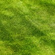 Grass field texture background — Stockfoto