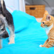 Animals at home dog and cat playing together on bed — Stock Photo