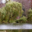 Autumn fall park. Lake and weeping willow tree. — Foto Stock