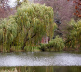 Autumn fall park. Lake and weeping willow tree. — Stock Photo