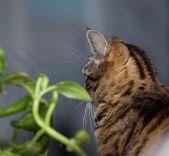 Kat en bloem op het venster — Stockfoto