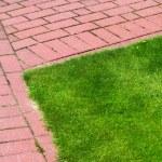 Stone pathway in garden, brick sidewalk — Stock Photo