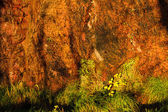 Background orange wet stone rock wall texture and green grass outdoor — Stock Photo