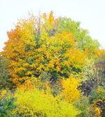 Beautiful autumn trees. Autumnal landscape. — Stock Photo