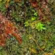 Orange stone natural rock wall and ivy leaves green plants — Stock Photo #40182677
