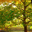 Stock Photo: Beautiful tree with colorful leaves in autumnal park. Nature.