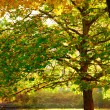 Beautiful tree with colorful leaves in autumnal park. Nature. — Stock Photo