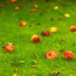 Autumn background, red apples on ground in garden — Stock Photo