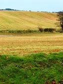 美丽的爱尔兰秋色字段 co.cork,爱尔兰的风景. — 图库照片