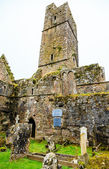 Kilcrea Friary — Stock Photo