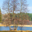 Single wooden bench and trees on river bank or lake shore outdoor. Autumnal tranquil landscape. — Stock Photo