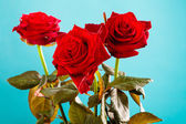 Bouquet of blossoming red roses flowers on blue — Stock Photo