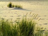Sea grass on the coast of the Baltic Sea — Stok fotoğraf