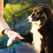 Dog paw and human hand doing a handshake outdoor — Stock Photo #45052017